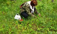 Советы ягодникам и грибникам по безопасному посещению леса